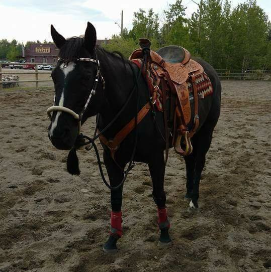 Horse Training Services - Alberta